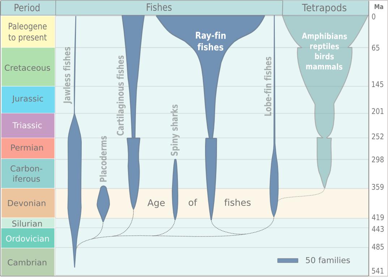 Visualizing Evolution   Evolution as a Creative Tool